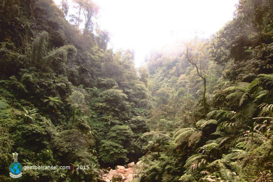 Hutan Curug Seribu
