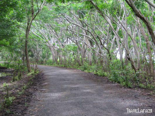 Hutan Lindung Sekaroh