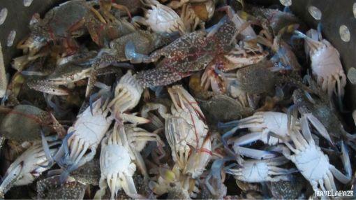 Hasil tangkapan nelayan Pulau Lancang