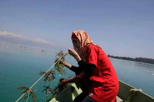 Penanaman rumput laut. Photo by @nutrisi_bangsa