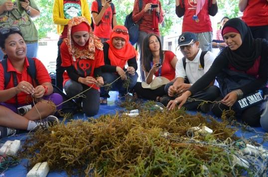 Proses pembibitan rumput laut. Photo by @andyputera