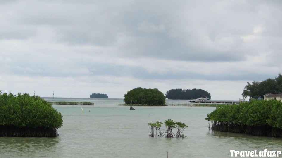 Mangrove di Pulau Harapan
