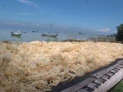 Pengeringan rumput laut. Photo by @nutrisi_bangsa