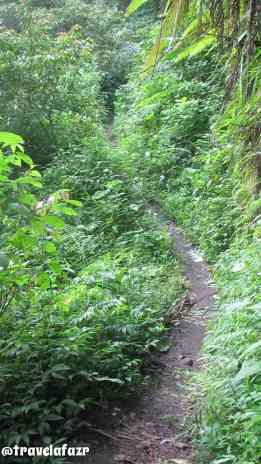 Jalur trekking ke Tiu Kelep